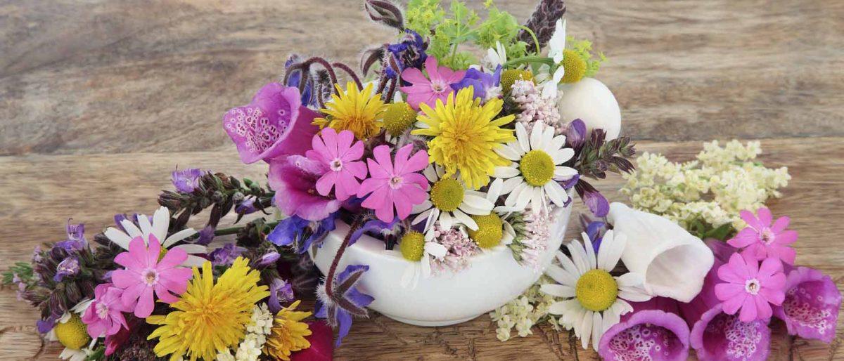 Nichola Rose Flower & Plant Display